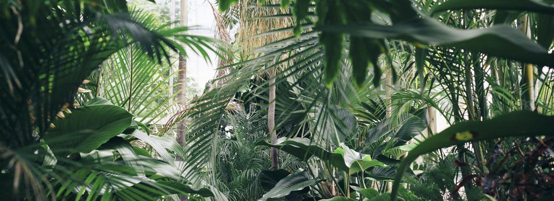 forêt humide (jungle)